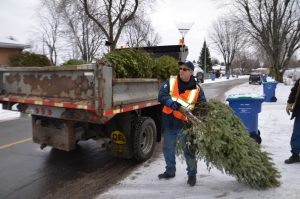 Worker putting Christmas tree in his truck