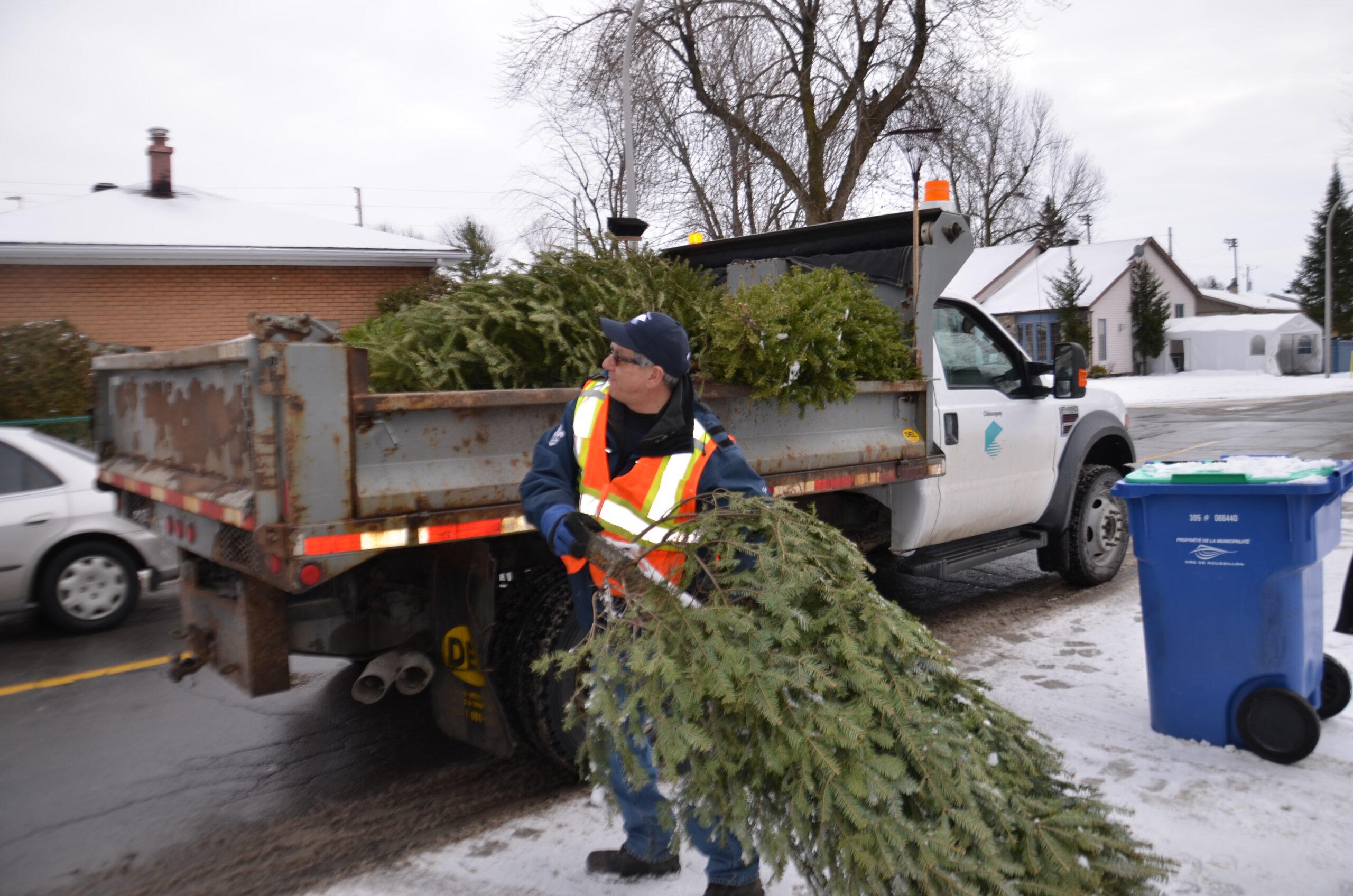 Travailleur qui met un arbre dans son camion