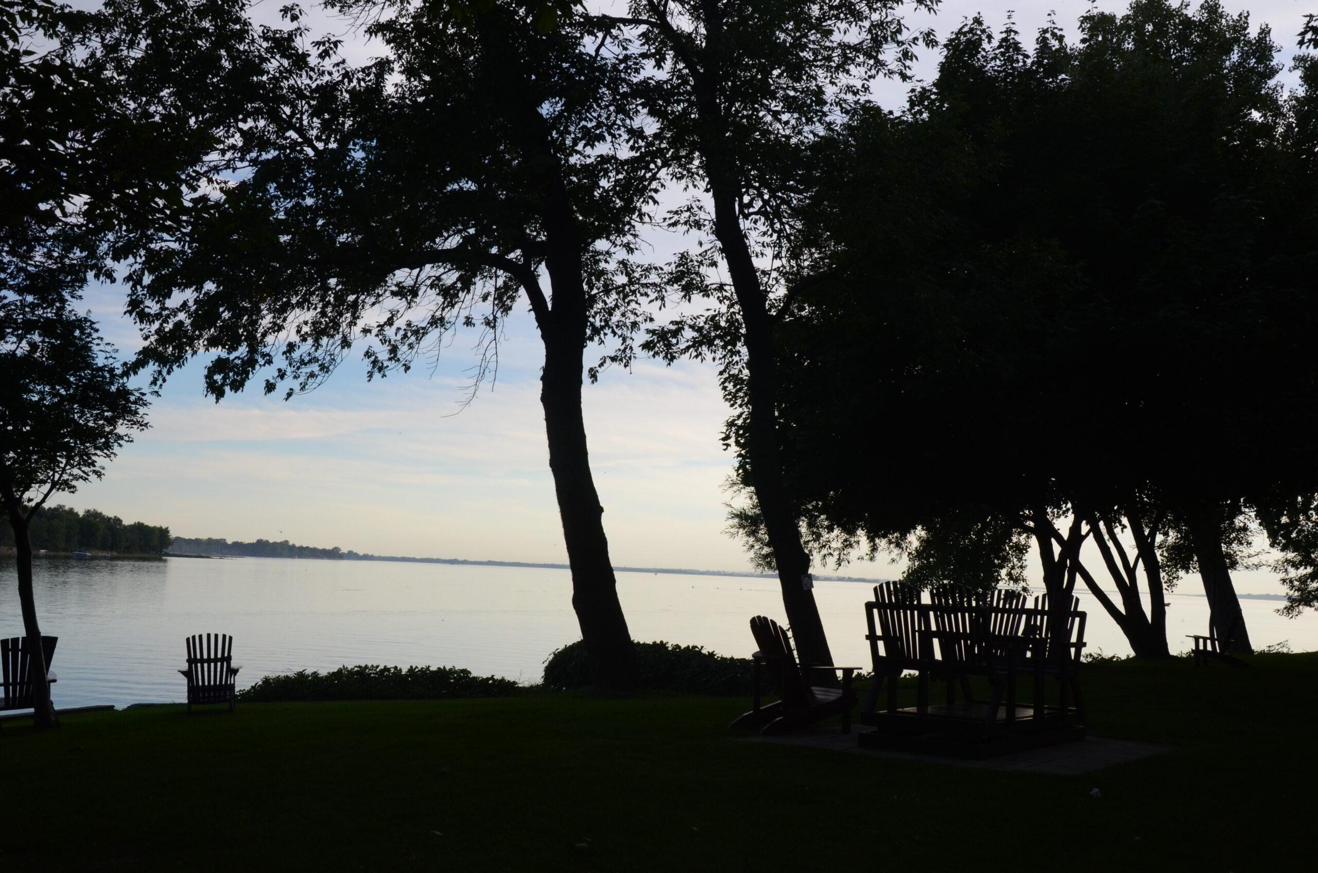 bancs au bord de l'eau avec des arbres