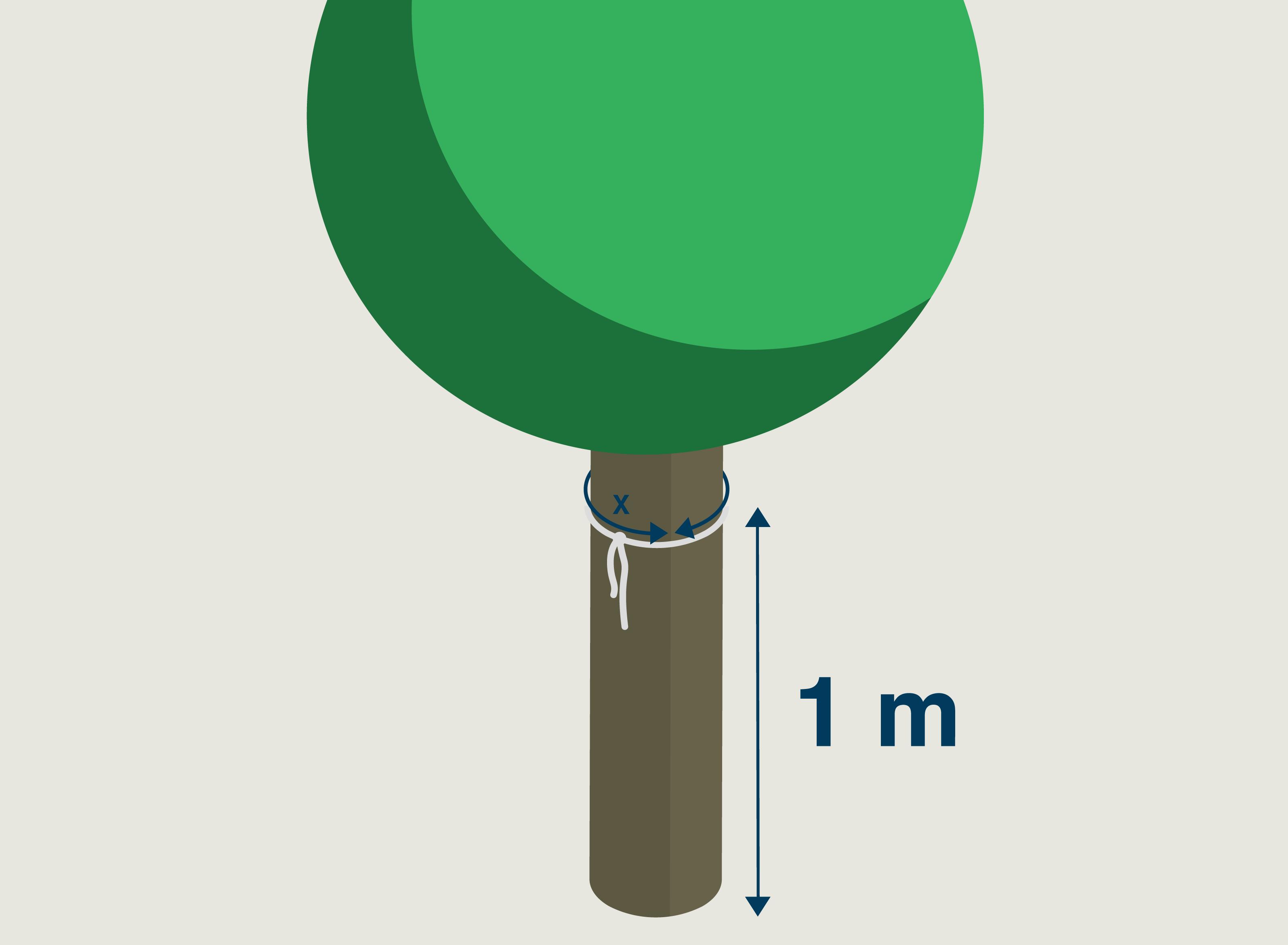 Schéma montrant un arbre d'un mètre
