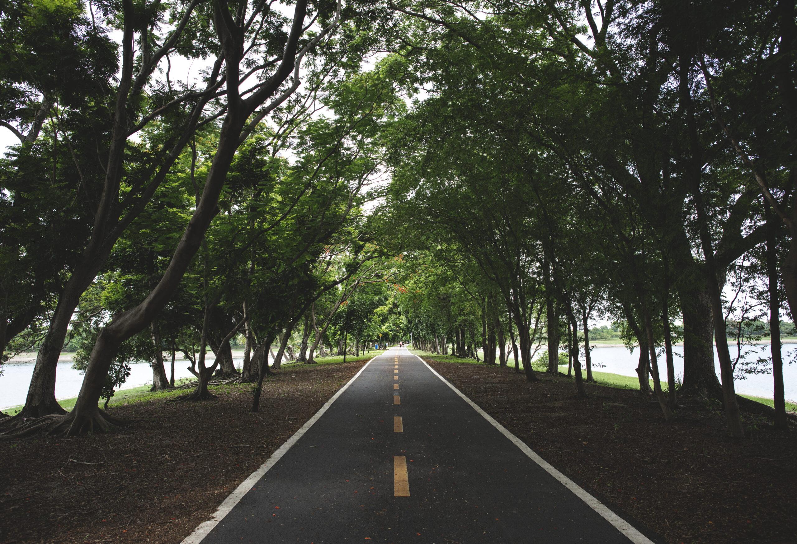 piste cyclable parmi les arbres