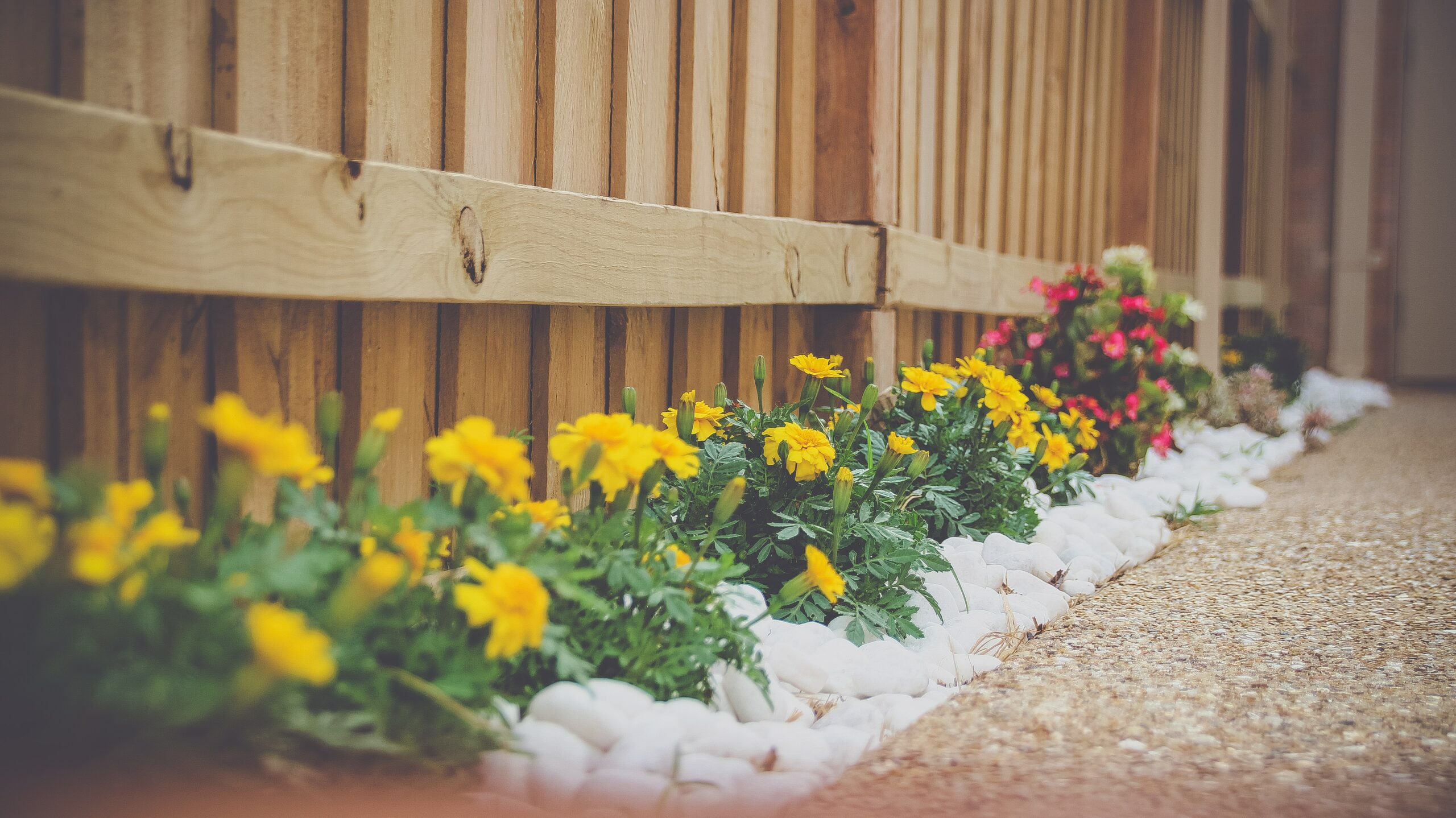 Flower bed next to a fence